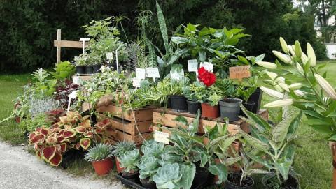 kwiaty-sprzedaz-ogrod.jpeg