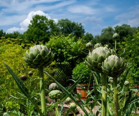 kulinarne, ogród, lato.jpg