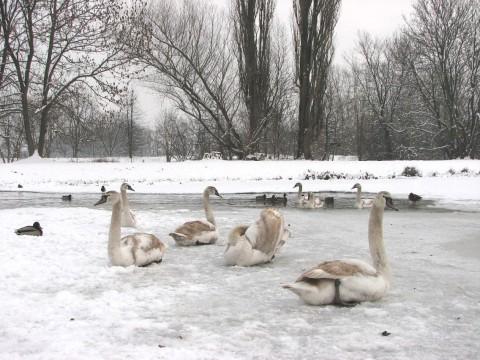 Zimowe obserwacje nad Jeziorem Wilanowskim. Fot. Julia Dobrzańska.JPG
