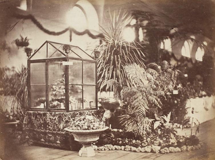 Wystawa ogrodnicza w budynku byłej Ujeżdżalni przy ulicy Królewskiej w Warszawie