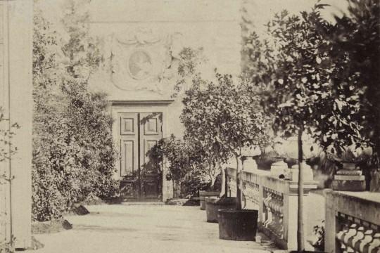 Wilanowska kolekcja cytrusów w XIX wieku