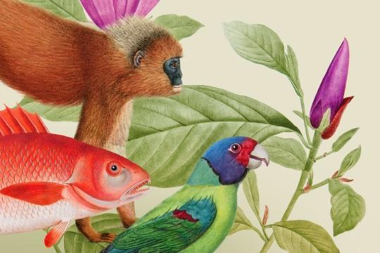 baner na stronę rośliny i zwierzęta 448x354.png