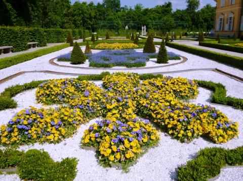 Bratki i niezapominajki w ogrodzie przy północnym skrzydle Pałacu. Fot. Julia Dobrzańska.JPG