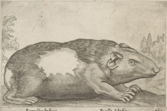 Przedstawienia fauny amerykańskiej w XVI-XVII w.