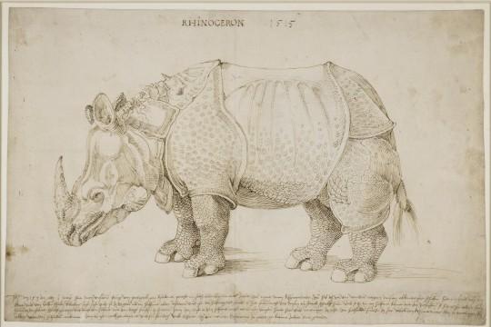 Jednorożce i nosorożce, czyli identyfikacja zwierząt pozaeuropejskich w XVI i XVII w.