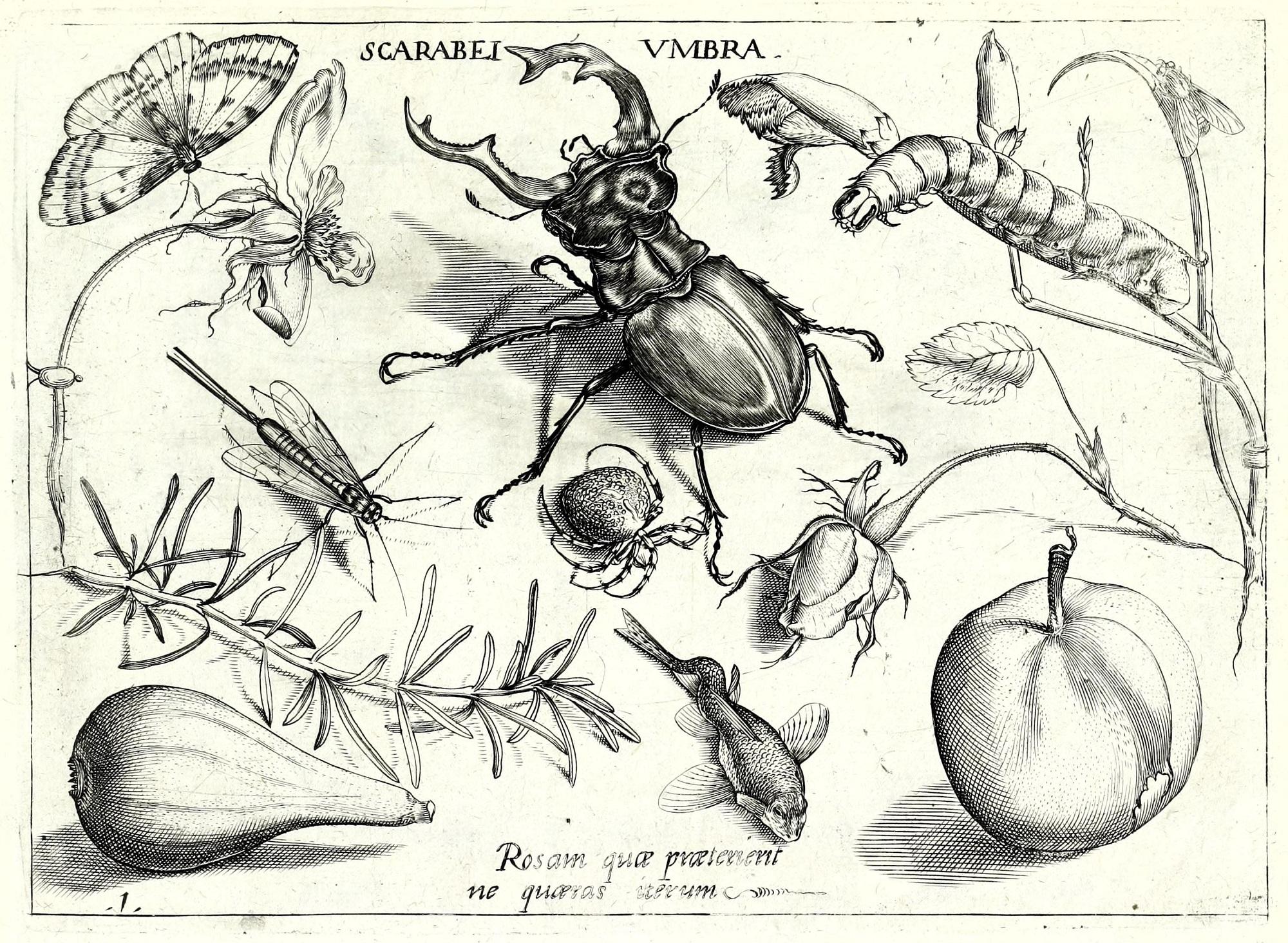 Jelonek i inne owady
