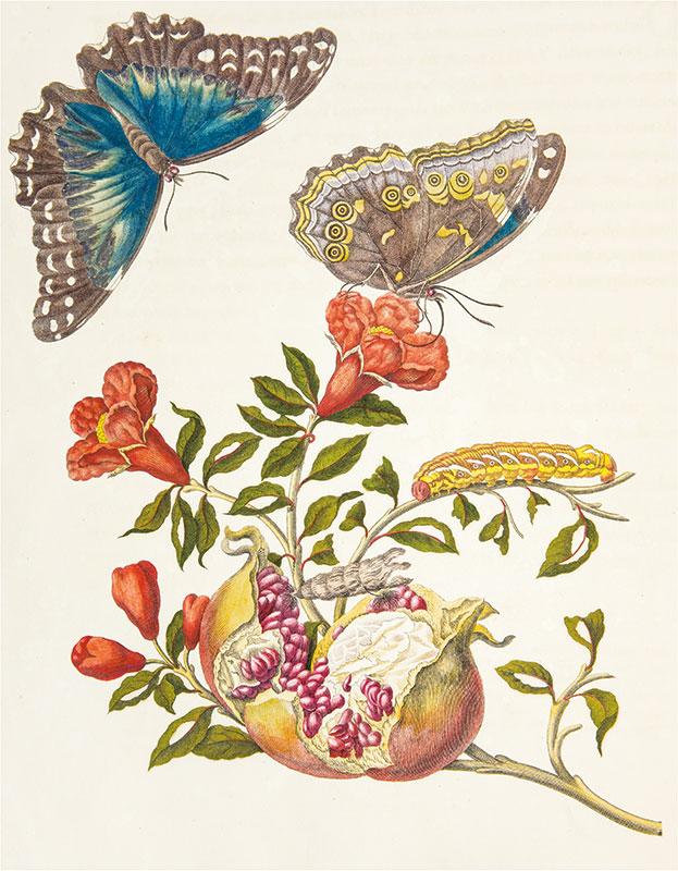 kwitnąca gałąź granatu z motylami