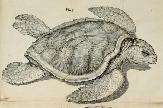 Jak w XVII w. wykonywano ilustracje naukowe, czyli o warsztacie malarskim  i rysunkowym Christopha Gottwalda