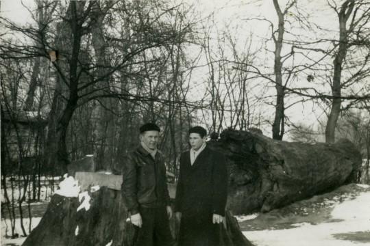 Dwóch mężczyzn w zimowych ubraniach na tle ogromnego ściętego drzewa. Stoją przy pniu, ścięty część leży za nimi.