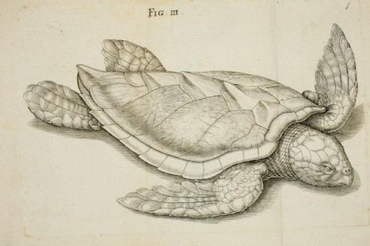 """Ilustracje eksponatów przyrodniczych oraz żywych roślin i zwierząt jako uzupełnienie wczesnonowożytnych kolekcji naturalistycznych: """"museo cartaceo"""""""