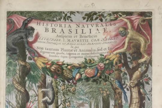 """""""Theatrum rerum naturalium Brasiliae"""" i Christian Mentzel: o jednej z technik tworzenia albumów sztucznych z odręcznymi ilustracjami obiektów przyrodniczych"""