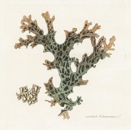 Zadanie dla botanika. Granicznik płucnik - porost. Michel Poisson.jpg