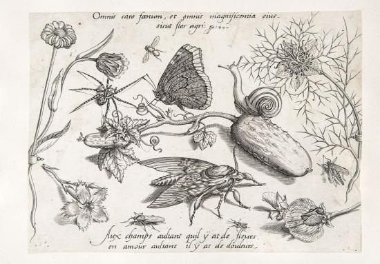 RiZ, Zadanie dla botanika, Grafika przedstawiająca ogrodowe rośliny i zwierzęta, Jacob Hoefnagel wg Jorisa Hoefnagela.jpg