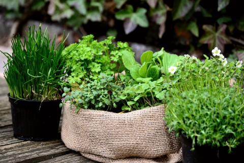 ogród, zioła, pixabay.jpg