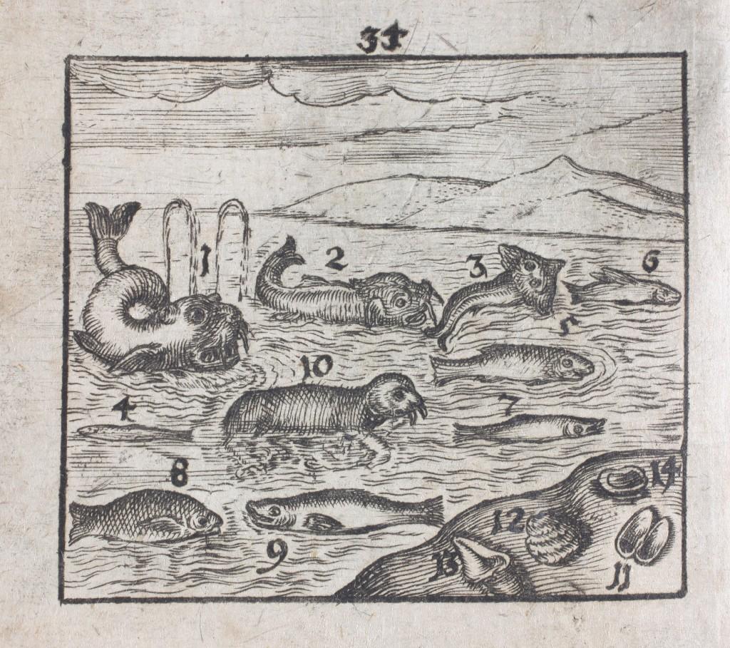 44_komensky_morskie ryby i ślimaki.jpg