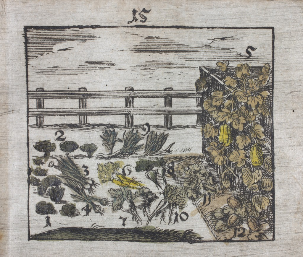 Ogrodowe owoce, ilustracja z elementarza Jana Amosa Komenskiego