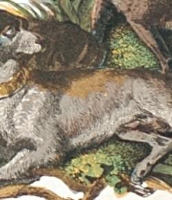 Pies, fragment litografii