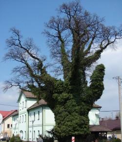 fot. venipig / Panoramio